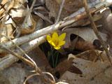 spring-02