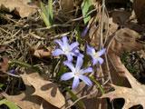 spring-03