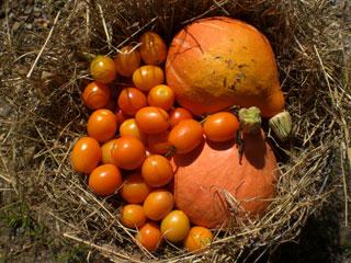091915-orange